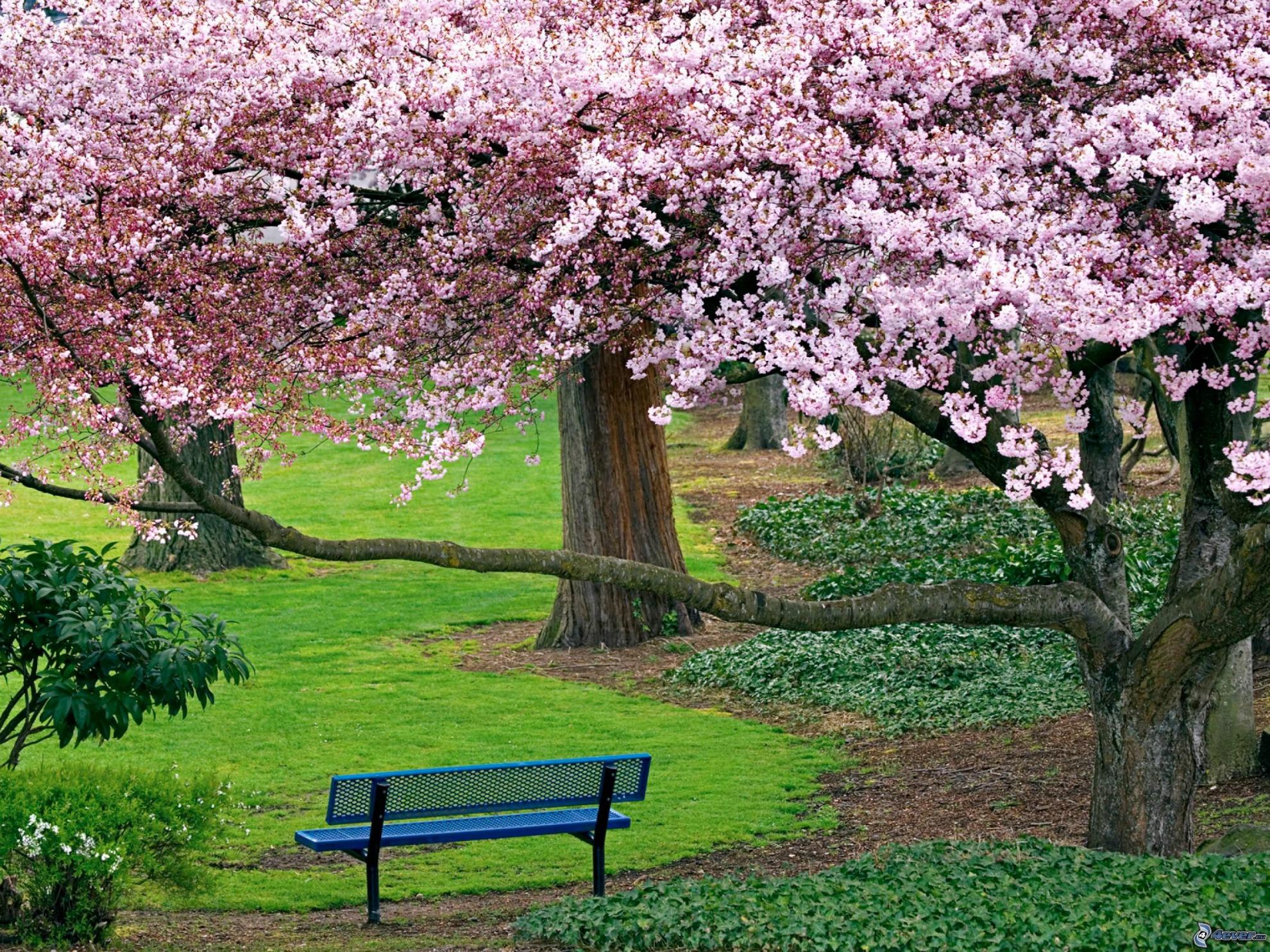 0varbol-florido,-banco-en-el-parque-165696