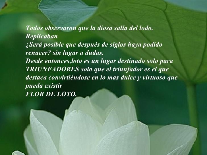 0la-flor-de-loto-la-una-reflexion-5-728